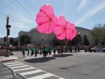 Cherry Blossom Parade